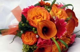 Flame Calalilies with Orange and Red Color Mix