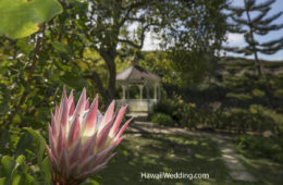 Kula Botanical Gardens Weddings