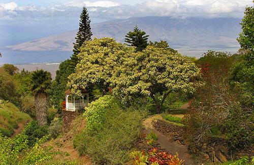 Kula Botanical Gardens Weddings