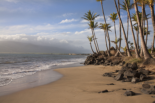 Palm trees are the back drop at Sugar Beach Cove, Kihei maui wedding and vow renewal location